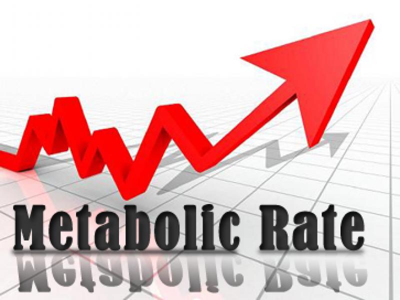 scăderea lentă a ratei metabolice a ratei metabolice