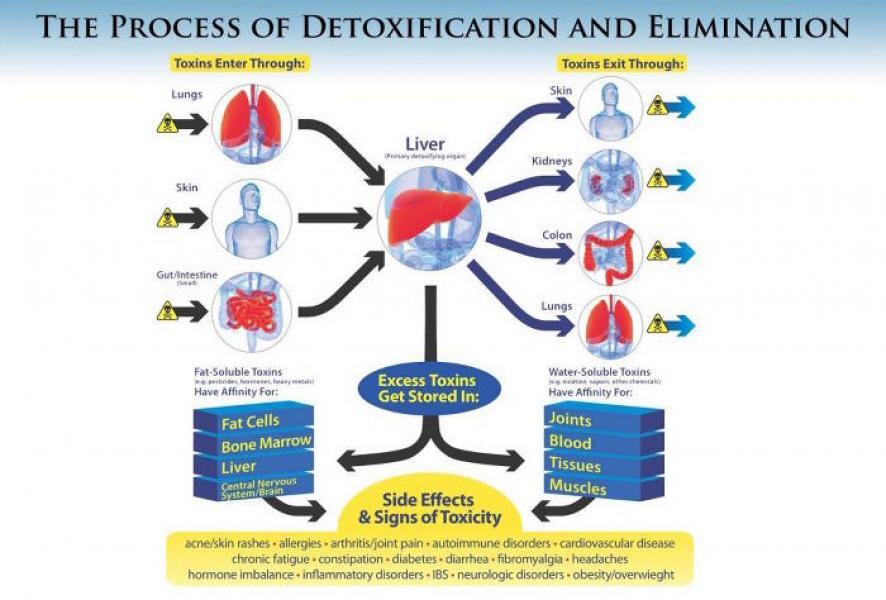 cum să elimini celulele de grăsime din corp