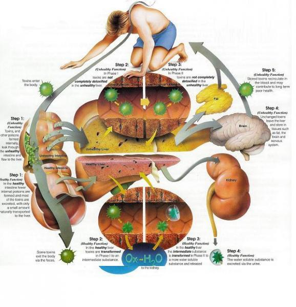 semne de detoxifiere a organismului)